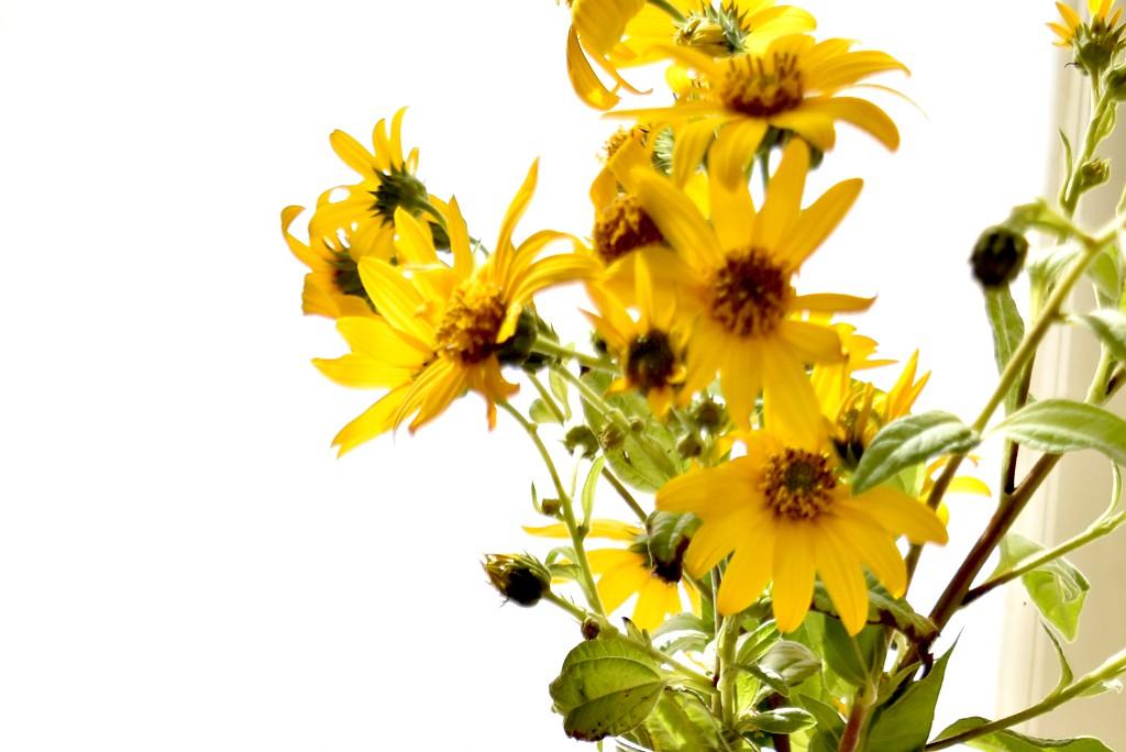 fiori di topinambur